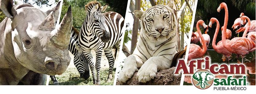 africam safari \u2013 corazón de puebla